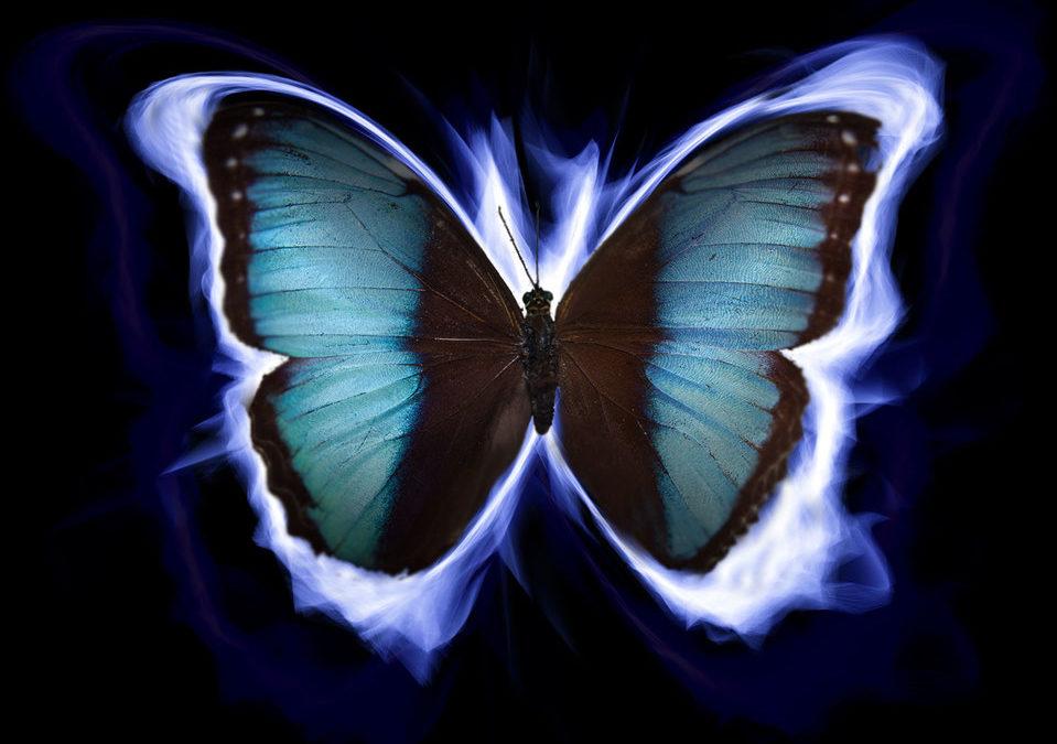 intuition troisième oeil petite voix papillon 6eme sens sixième sens