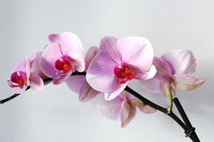 fleur-orchidée-test-intuition